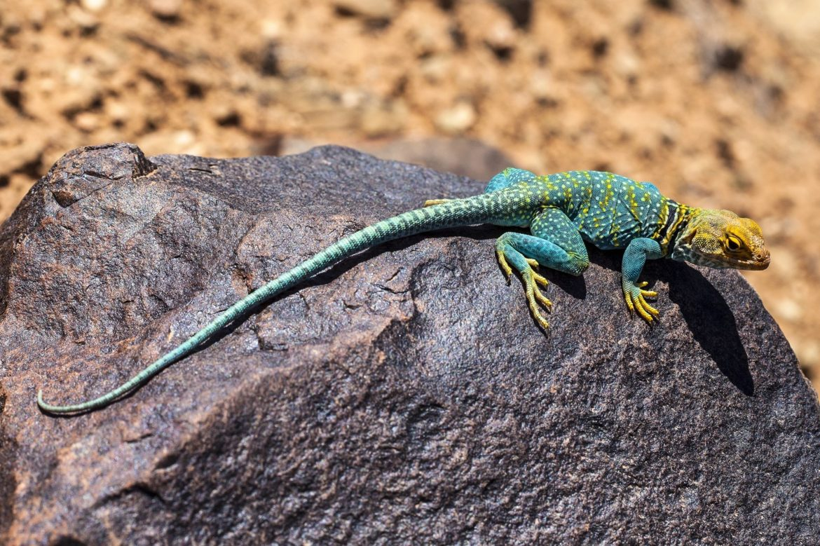4 Animals That Have Asexual Reproduction